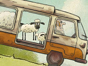 Home Sheep…